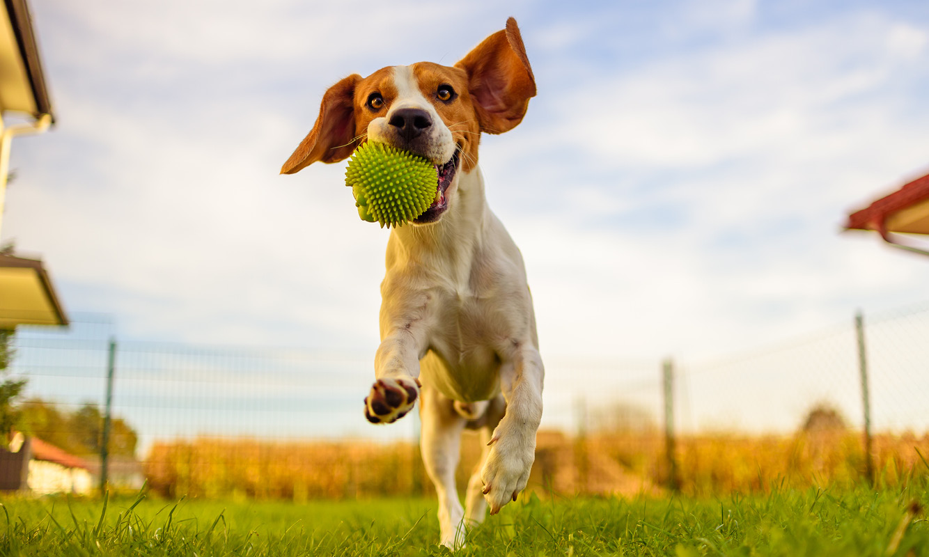 can moving affect your dog